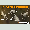 IMECH045 1/35 Typical Cat Assortment